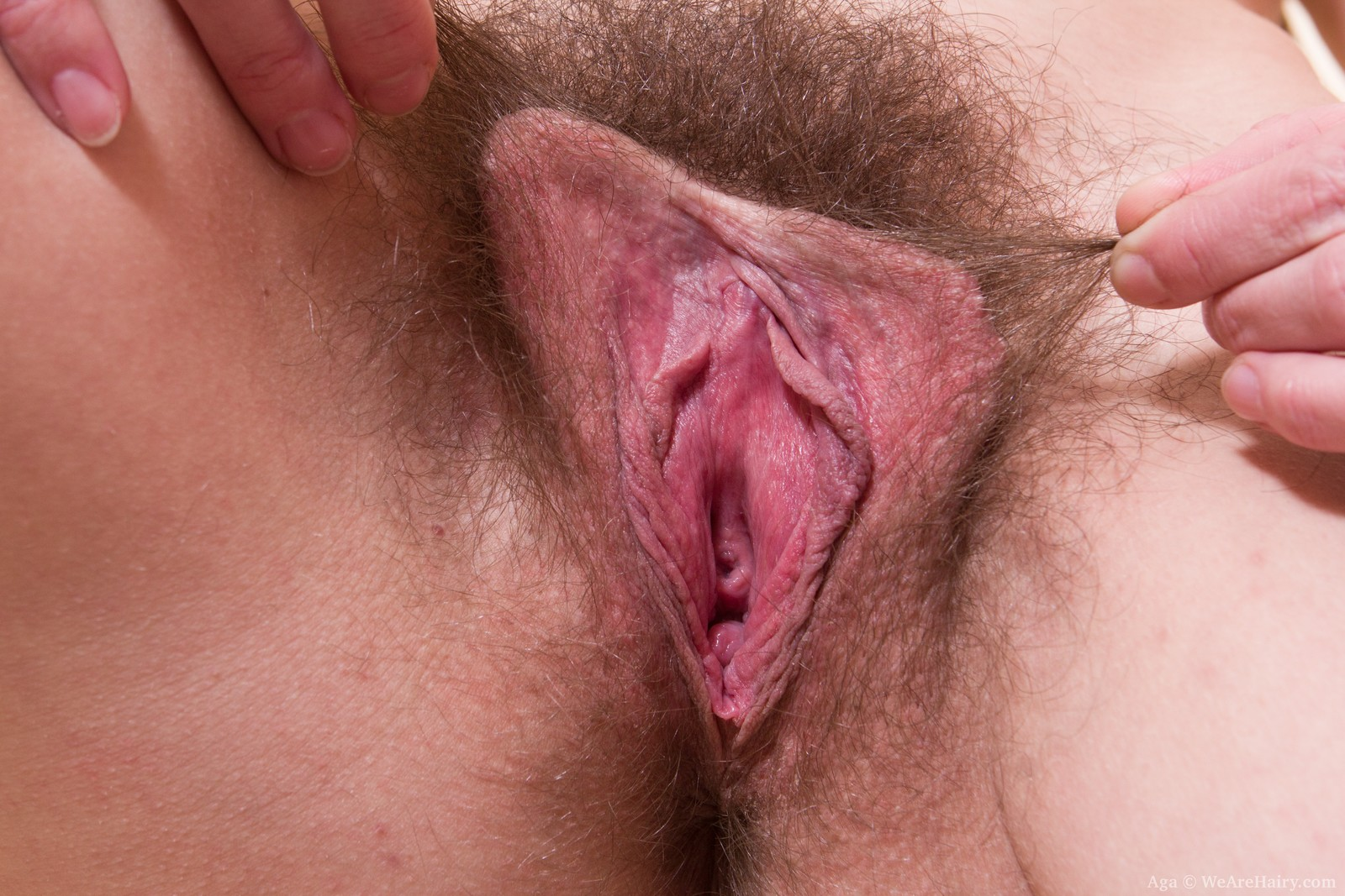 Close up hairy vagina all clear