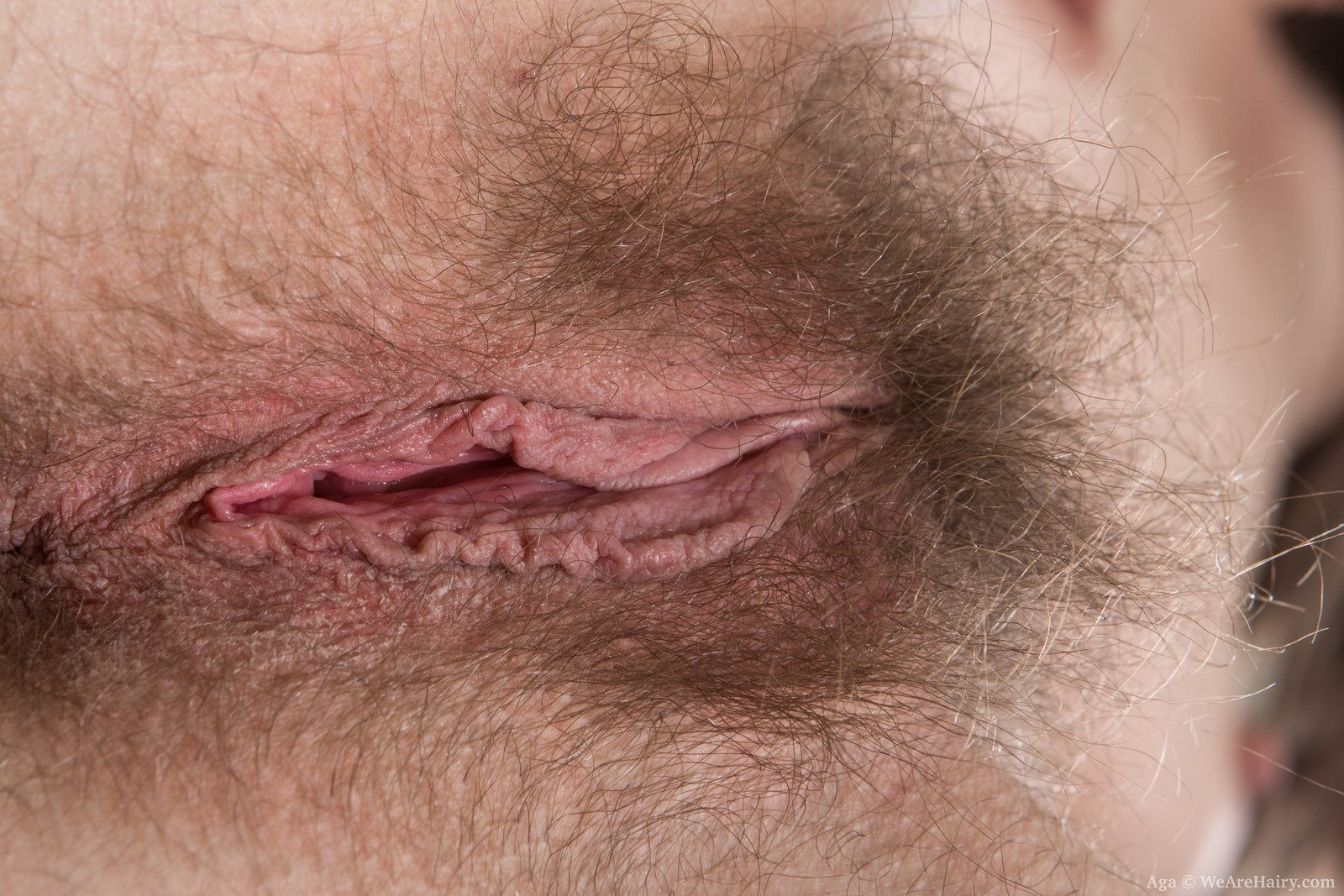 hairy ass milf close up hirsute vagina | the hairy lady blog